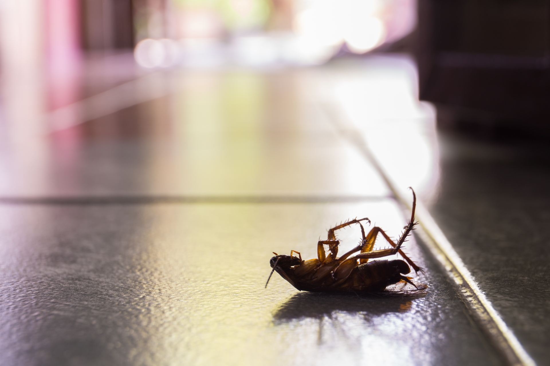Cockroach Control, Pest Control in Forest Gate, Upton Park, E7. Call Now 020 8166 9746