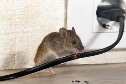 Pest Control in Forest Gate, Upton Park, E7. Call Now! 020 8166 9746